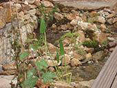 Bassin aquatique coulant sur des pierres