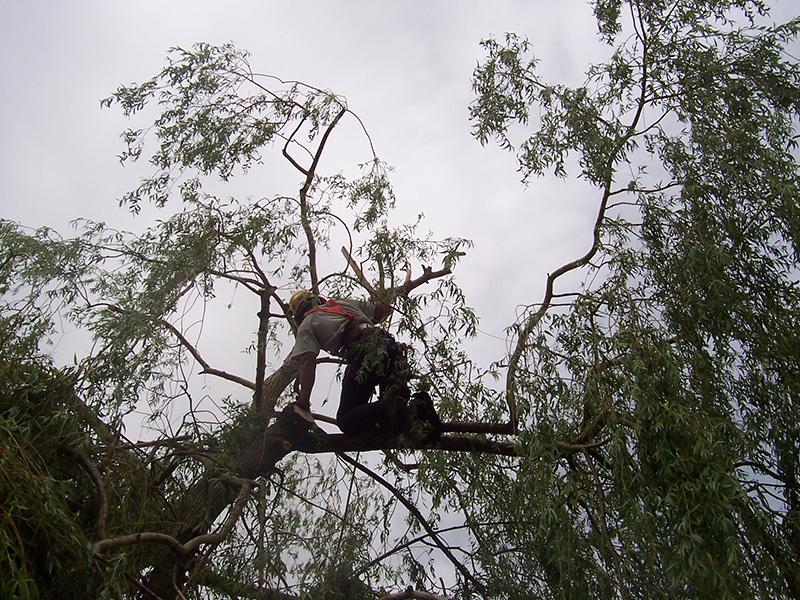elagage arbre 43